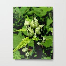 Raspberry Buds Metal Print