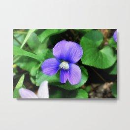 Violet 06 Metal Print