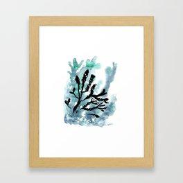 Bladder Wrack Framed Art Print