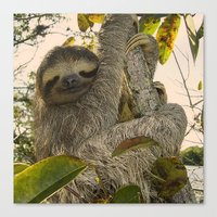 sloth Canvas Prints featuring Sloth by MehrFarbeimLeben
