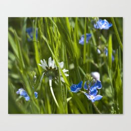 Tiny Beauties Canvas Print