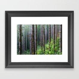 Trees: II // Oregon Framed Art Print