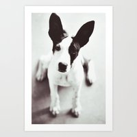 coco Art Prints featuring Coco by Beverly LeFevre