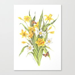 Daffodils and Butterflies Canvas Print