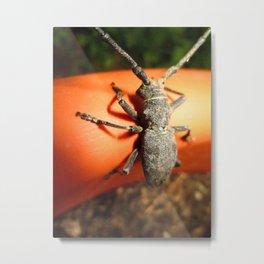 Cerambicidae 1 Metal Print