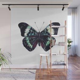 Butterfly Prola Beauty Wall Mural
