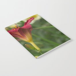 Bronze-Red Day Lily Notebook