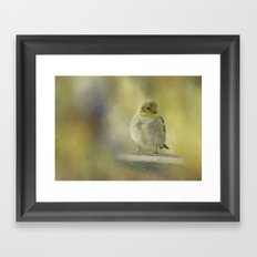 American Goldfinch Framed Art Print