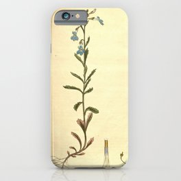 Flower lobelia coronopifolia Buck s horn leaved Lobelia iPhone Case