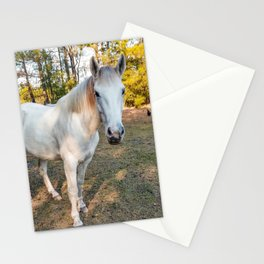 """Apache"" The Worrier Stationery Cards"