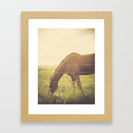 Texas Horse Grazing Framed Art Print