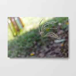 wonderful garden rose Till There Was You Metal Print