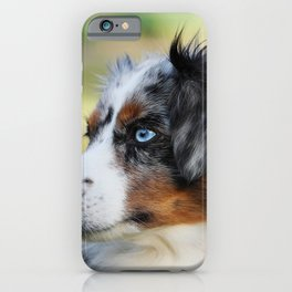 Australian Shepherd Blue Merle Dog iPhone Case