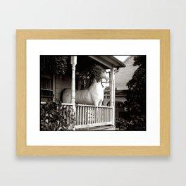 Horse on a Porch, Lovettsville, Virginia Framed Art Print