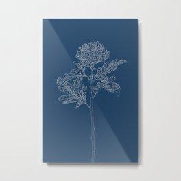 Chrysanthemum Blueprint Metal Print