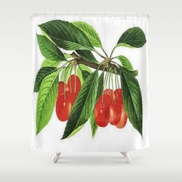 Red Cherries Vector on White Background Shower Curtain