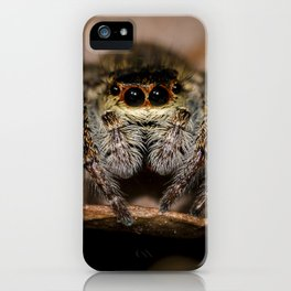 Lucus the Jumping Spider iPhone Case