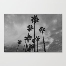 Black and White Los Angeles Palms Canvas Print