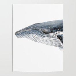 Humpback whale portrait Poster