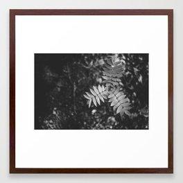 Floral studies III Framed Art Print