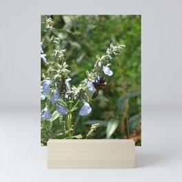 Bumblee on Prairie Blue Sage Salvia Azura Mini Art Print