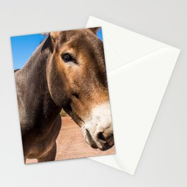 Approach of a donkey in its natural habitat Stationery Cards