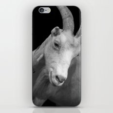 black goat iPhone & iPod Skin