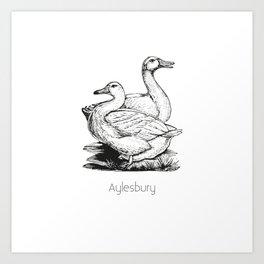 Aylesbury Duck | Animal Art Design Art Print