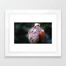 wet feathers Framed Art Print