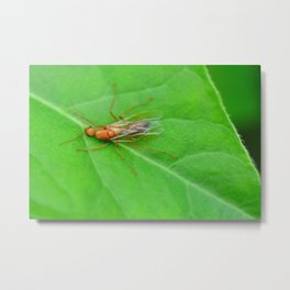 flying bug on a leaf Metal Print