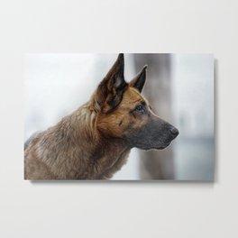 A German Shepherd Metal Print