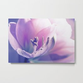 Soft beauty amarillys Metal Print