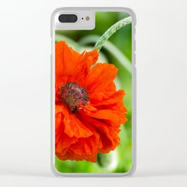 Flower wall art, flower print decor. Red poppy blooming on field. Wild red poppies flowers. Clear iPhone Case