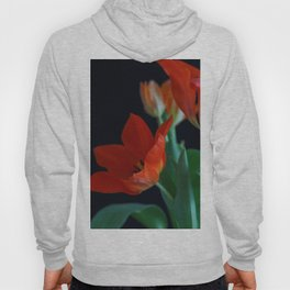 Close up of Crimson Red Tulip on Black Background Hoody