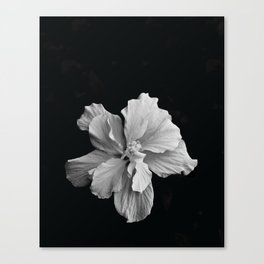 Hibiscus Drama - Black and Grey Canvas Print