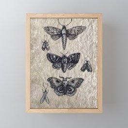 Moth studies Framed Mini Art Print