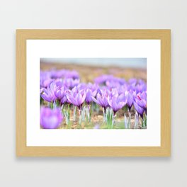 Flower photography by Mohammad Amiri Framed Art Print