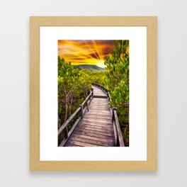Mangrove Forest Sunset Framed Art Print