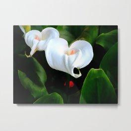 Flowering Calla Lilly Metal Print