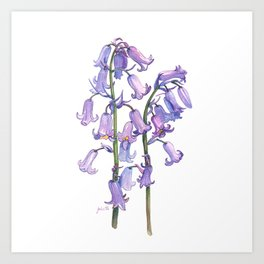 English Bluebells Art Print