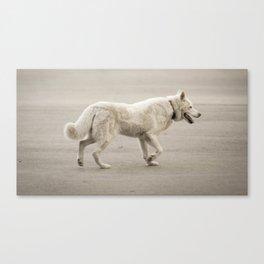 Whitey Canvas Print