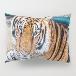 Tiger, My Bottom is Not Made Out of Springs Pillow Sham