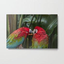 Parrot Kiss Metal Print