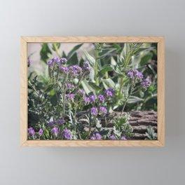 Desert Fiddleheads and Fallen Branch Coachella Preserve Framed Mini Art Print