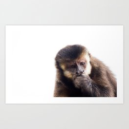 Thinking Capuchin Monkey Art Print