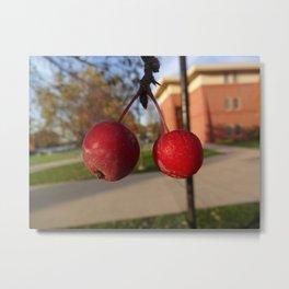 Cranberries Close Up Metal Print