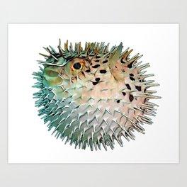 Balloon Fish Tetraodontidae Angry Swollen Thorny Body Blue Overlay Fish Art Print