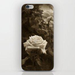 Pink Roses in Anzures 5 Antiqued iPhone Skin