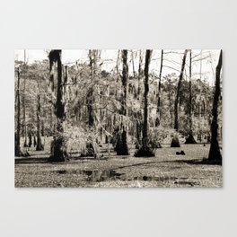 For the Love of Cypress Trees and Swamps Canvas Print