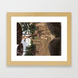 Cute giraffe in a zoo, Malaysia Framed Art Print